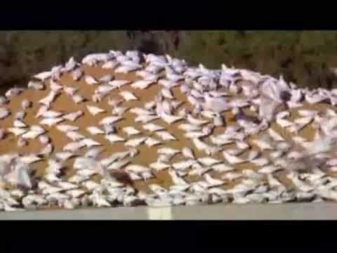 Australian Journey 2012- Parrots In The Land Of Ozz DnB Remix - Diknek Lorrie's