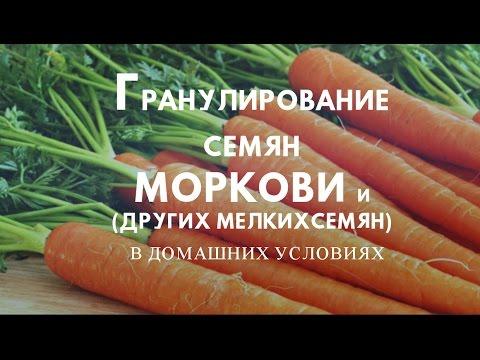 Морковь из семян в домашних условиях