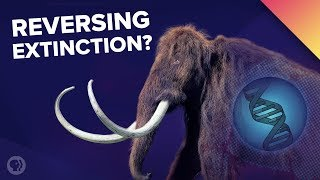 A Mammoth Undertaking: The Science of De-Extinction!