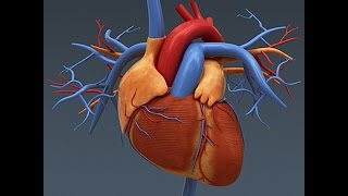 Download Anatomy and Physiology of The Heart 3Gp Mp4