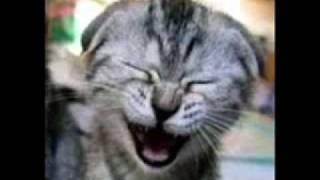 Toques Para Celular: Gato Miando