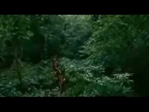 Apocalypto Maranao Version Part 4 video