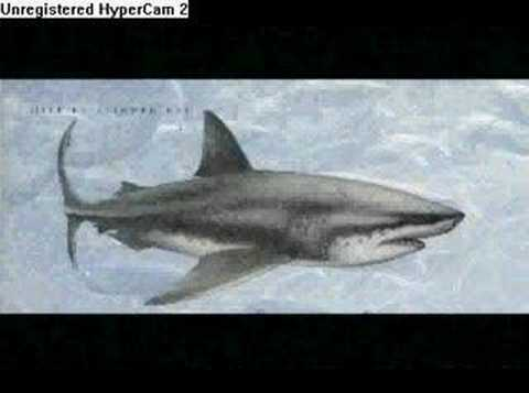 The megalodon-World's Biggest Shark Video