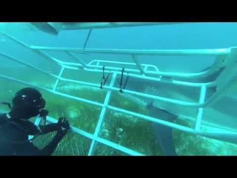 FACE TO FACE! GREAT WHITE SHARK DIVE NEPTUNE ISLANDS AUSTRALIA 2014 - Caroline Scuba Diver Life