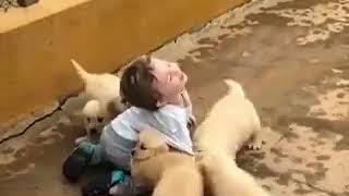 Funny Babies videos