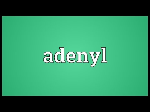 Header of Adenyl