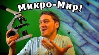 Нифёдов изучает Микро-Мир под микроскопом