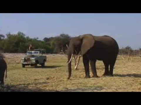 Endangered animals - elephants tracked by conservationists - BBC wildlife