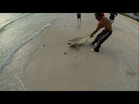 Blacktip Shark Fishing