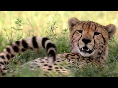 Secrets Of Tanzania - Roie Galitz video
