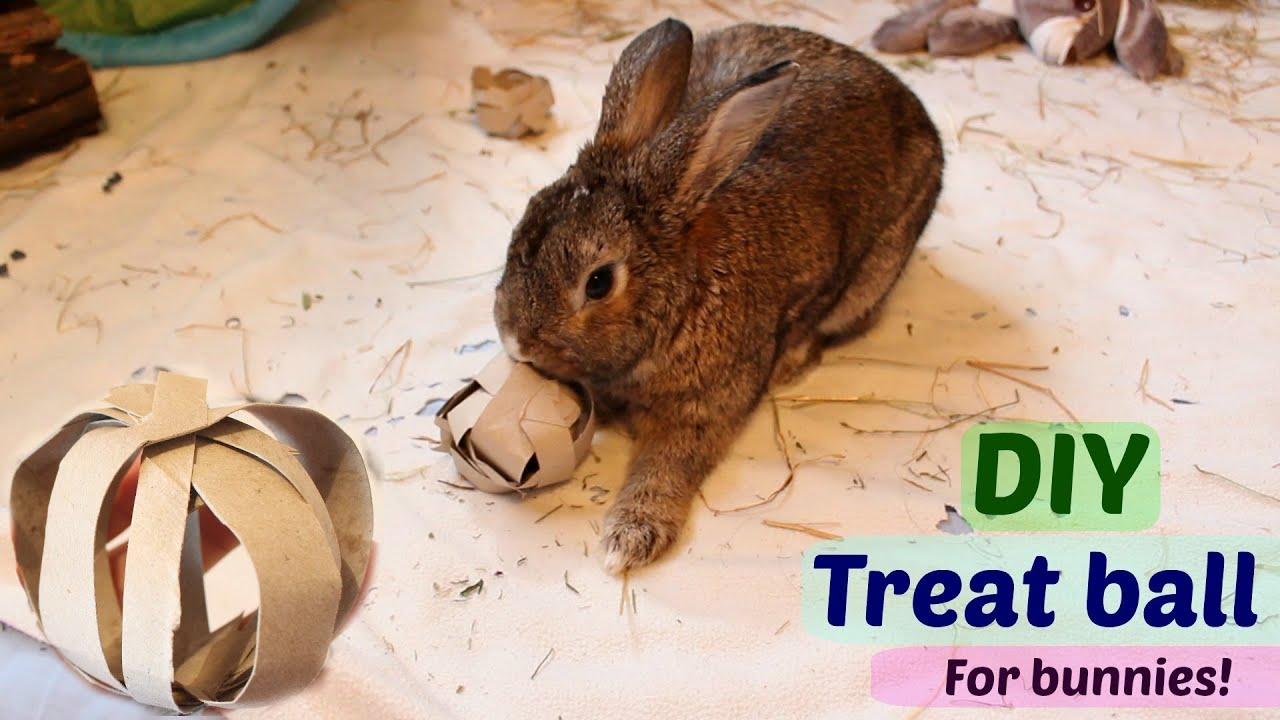 Diy Bunny Toys Diy Treat Ball For Bunnies