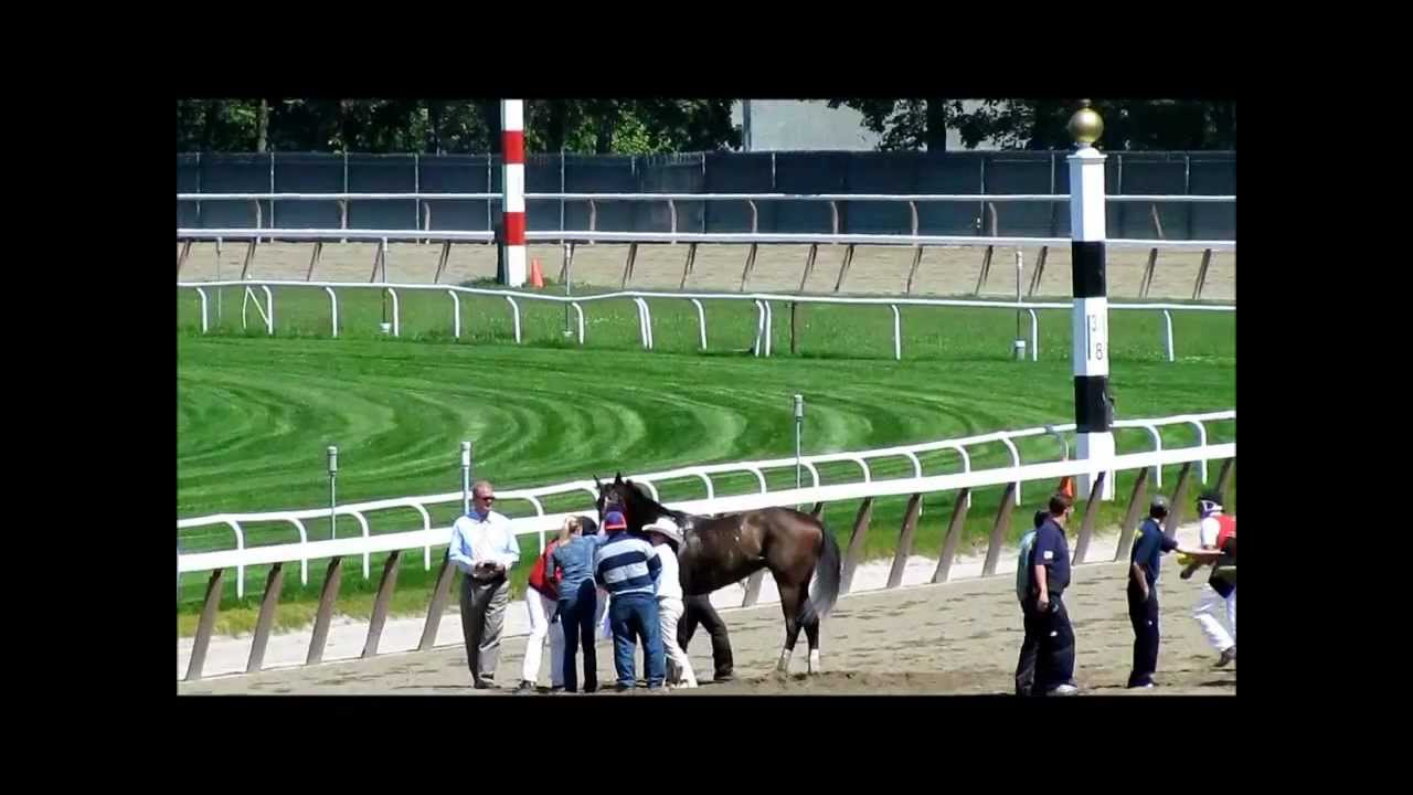 Belmont park race track tour horse down youtube