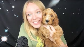 ASMR Meet my new puppy Mabel (Whispered)