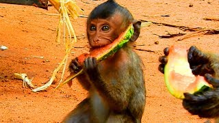 So Good To See Baby Lori has A Chance To Eat Water Melon  Lori Like This| It Is Good For Her Health