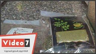 بالفيديو..«شاى الشجرة المعجزة»..تركيبة عطارية تفقدك 8 كيلو من الوزن خلال شهر