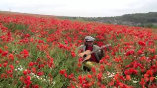 Watch Teardrop Explodes Poppies in The Field video