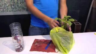 Maceta con sistema de riego sustentable