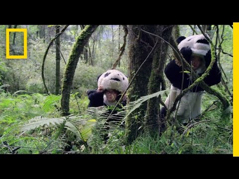 Pandas: The Journey Home Trailer