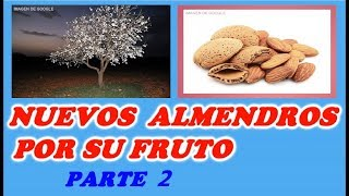 Como Reproducir Almendros Por Su Fruto 2ª PARTE // Almond Trees by Its Fruit Part 2