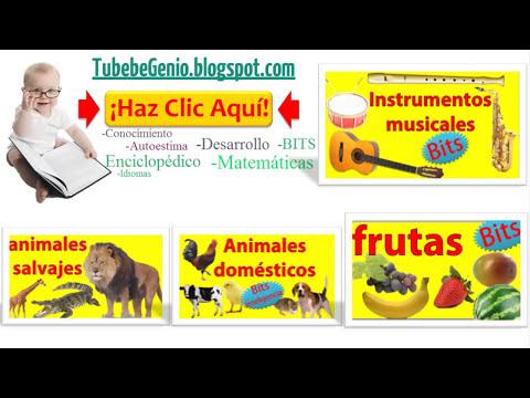 Animales marinos para niños de preescolar | Bits de lectura+Inteligencia bebés/niños (0-7 años)