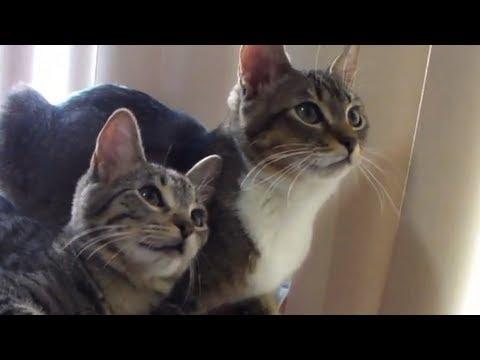 Kittens being kittens!
