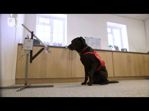 New prototype device to allow dogs to detect cancer in humans