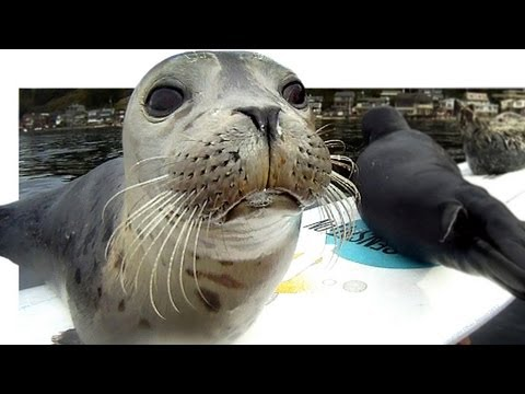 Seal Pup Slip n' Slide (surfboard remote camera)