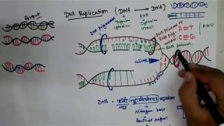 DNA replication in hindi