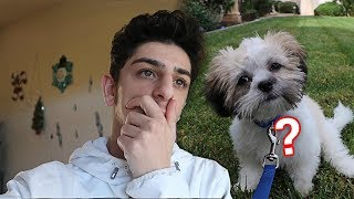 What REALLY happened to my new dog..? | Vlogs | FaZe Rug