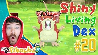 RANDOM SHINY RATICATE CATCH REACTION! Pokemon Let's GO Shiny Living Dex #20