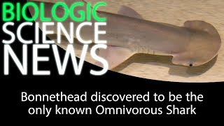 Science News - Bonnethead discovered to be the only known Omnivorous Shark