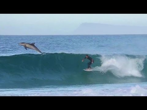 Teale Vanner - Surfing with Dolphins