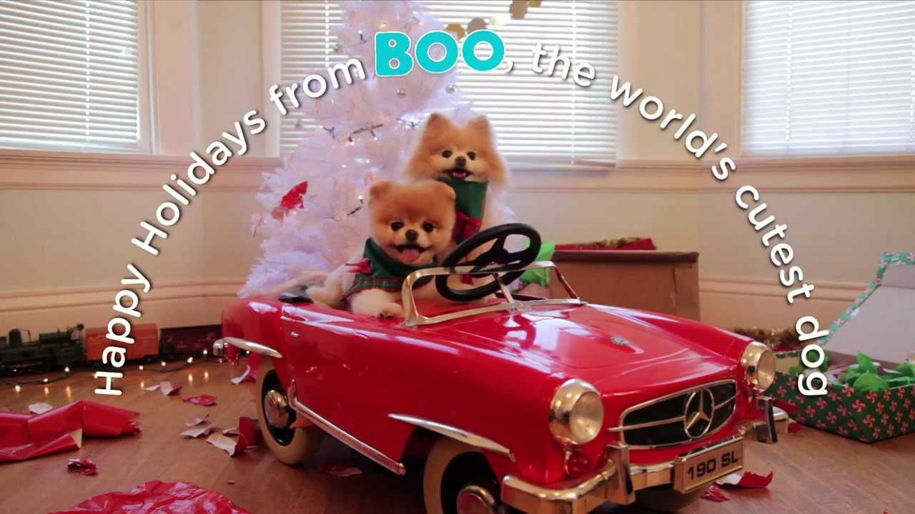 A Holiday Adventure With Boo The World S Cutest Dog Youtube