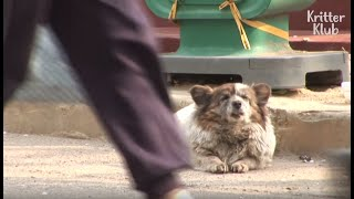 Dog Waits In Tears For 10 Years, Longing For Her Owner To Come Back | Animal in Crisis EP60
