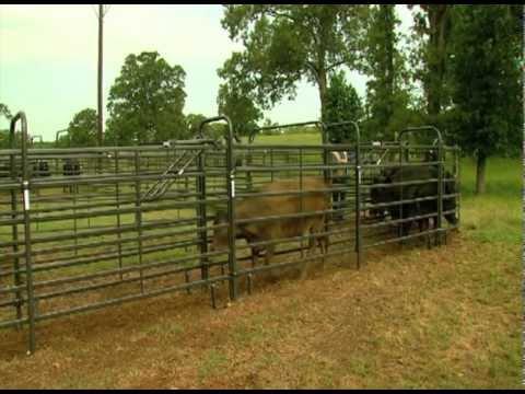 Priefert Medium Cattle Working Systems Youtube
