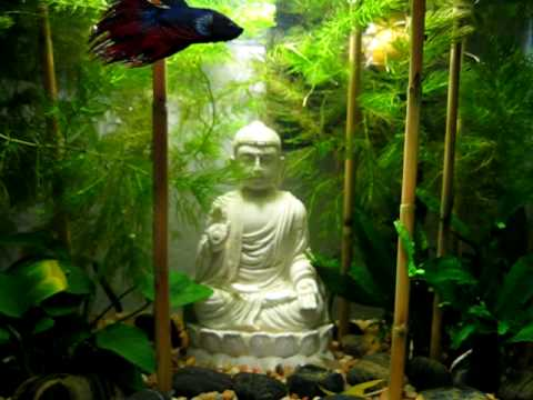 Zen buddha rock garden betta aquarium youtube for Decoration zen aquarium