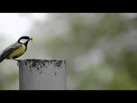 BBC East Midlands Summer of Wildlife Interview Jack Perks