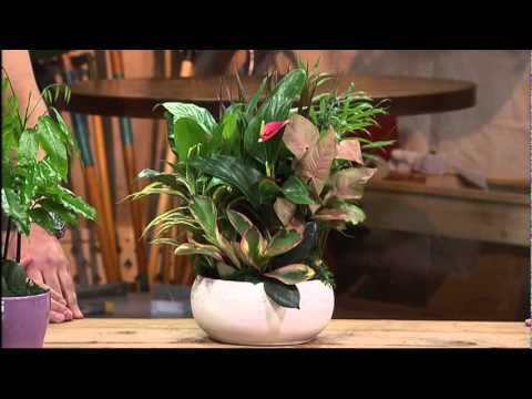 Gardener's Hotline - Cacti And Indoor Plants video