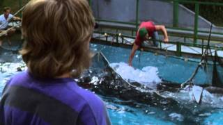 Free Willy - Trailer