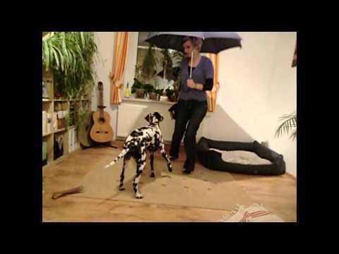 Sonnenschirm Hi-Tech Colmic Fiberglas Regenschirm