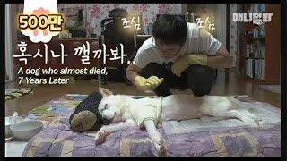 """다섯살을 못 넘길거라던 백구는 여덟살이 되었습니다 ㅣ The Dog Says, """"Don't Go.. I'm Still Alive.."""" EP2"""