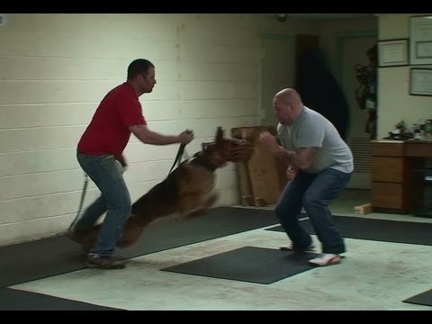 Cross Training a Schutzhund Dog to a Personal Protection Dog (K9-1.com)