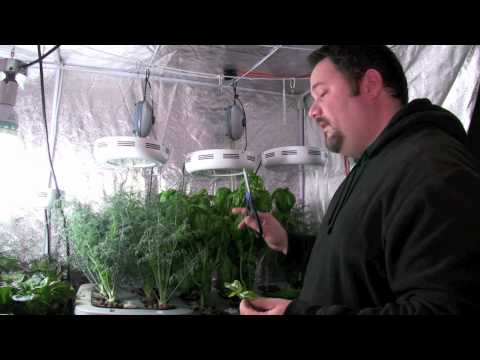 How to clone plants for hydroponic systems