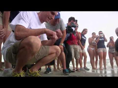 Rehabilitated Sea Turtle Returns to Fla. Waters