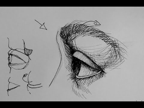 Side View Eye Drawing Draw an Eye in Side View