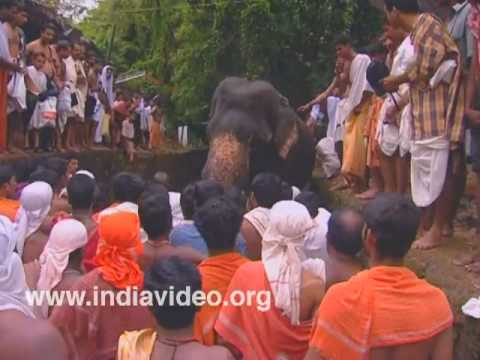Farewell to elephants at Akkare Kottiyoor