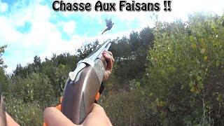 Chasse Aux Petits Gibiers - Tir De Plusieurs Faisans