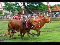 How to train your Bull to Race (from MADURA)
