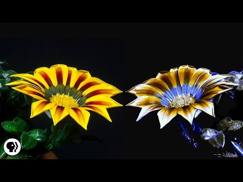Electric Buzzaloo - How Bees See the Invisible | It's Okay to be Smart | PBS Digital Studios