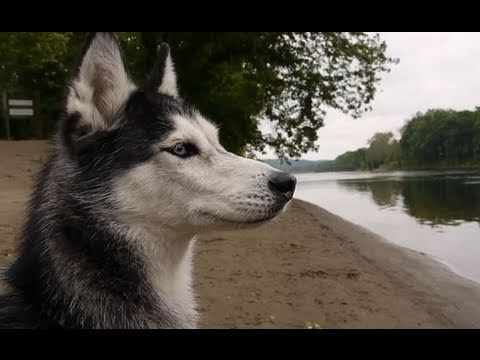 CAMPING WITH 5 DOGS! - Mishka the Talking Husky